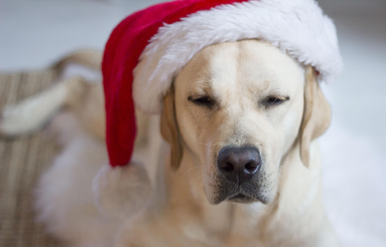 Joulukalenteri lemmikin joulu checklist blogi